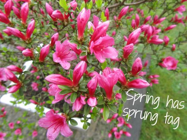 Spring has sprung tag 1