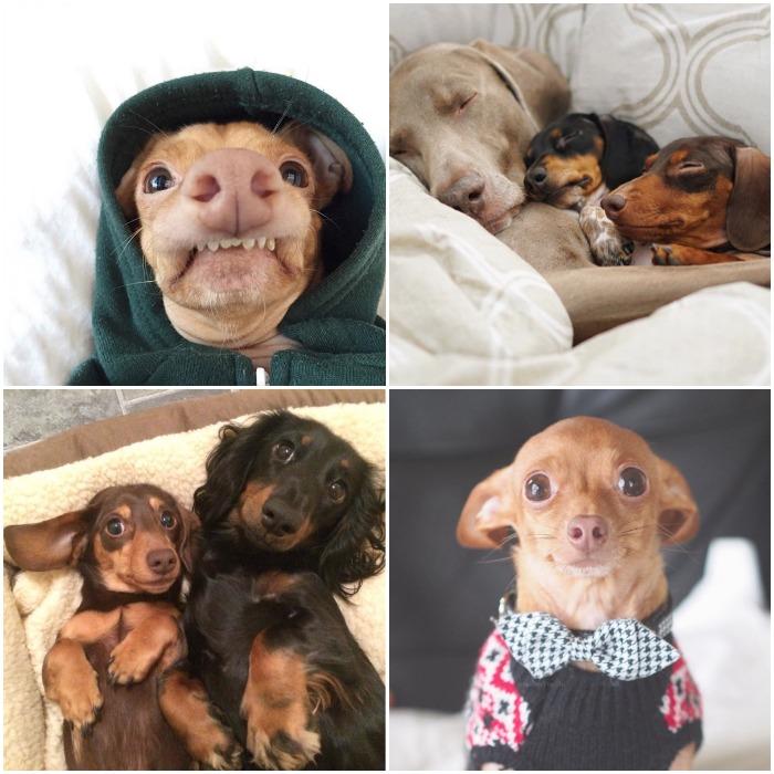 Favorite Instagram Dogs